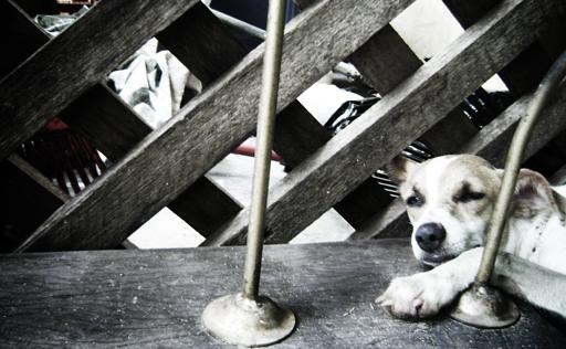 Doggia-02
